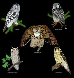 Set of realistic owls on branches vector