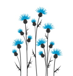 thistles vector image