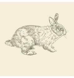 Vintage hand drawing rabbit vector image vector image