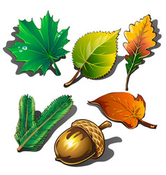a collection leaves different trees and ripe vector image