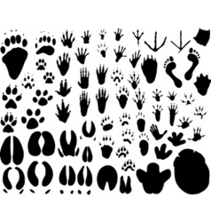 Animal tracks vector