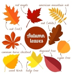 Autumn leaves set 2 vector
