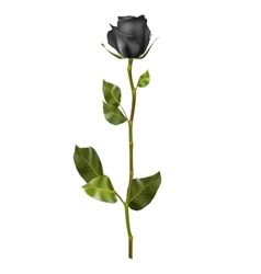 Realistic Black rose EPS 10 vector image vector image