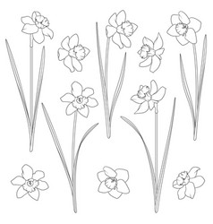 set with a narcissus vector image