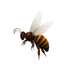 Striped flying bee side view icon vector