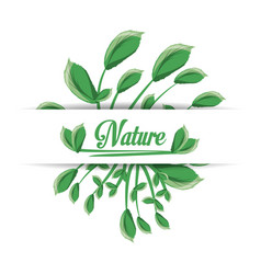 Natural banches with leaves plants vector