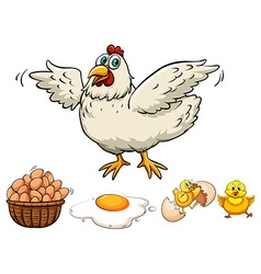 Chicken and eggs in basket vector image