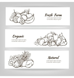 hand draw fruits banner vector image