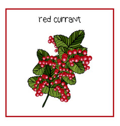 icon ripe strawberry raspberry vector image