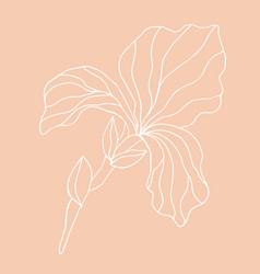 minimalism card floral art design vector image