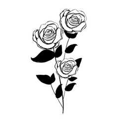 monochrome sketch with plant of roses with leaves vector image