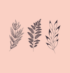set of plants botanical drawn vector image