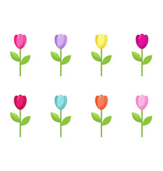tulip collection vector image
