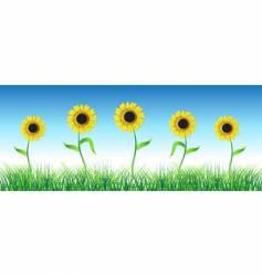 sunflower on green field vector image vector image