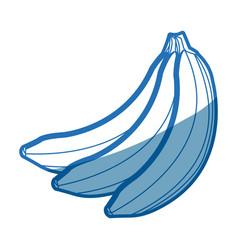 banana fruit delicious nutrition image vector image