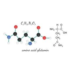 C5H10N2O3 glutamine amino acid molecule vector image