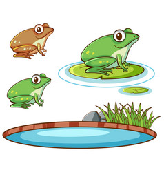Isolated picture frogs and pond vector