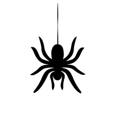 Sider hanging on cobweb isolated vector