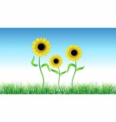 sunflower on green field vector image