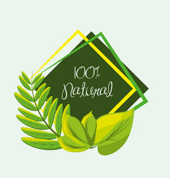 natural plants with branch and leaves vector image