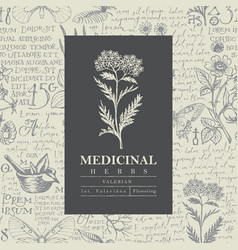 Beautiful label or banner for valerian vector
