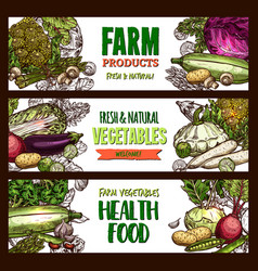 sketch banners of farm organic vegetables vector image