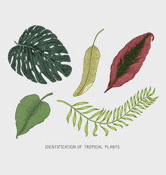 engraved hand drawn tropical or exotic leaves vector image vector image