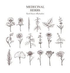 Hand Drawn Medical Herbs Collection vector image