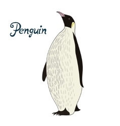 Bird penguin vector