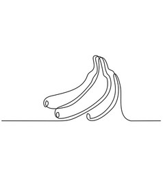 continuous one line draw bunch bananas fruits vector image
