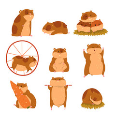 Cute cartoon hamster characters set funny animal vector