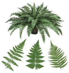 Fern and fern leaves hand drawn vector