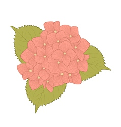 flower hydrangea isolated on white vector image