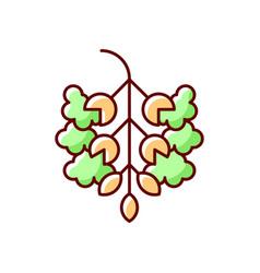 Poplar tree pollen rgb color icon vector