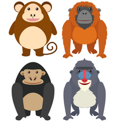 four types of monkeys on white background vector image