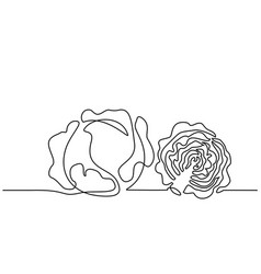 Continuous one line draw vegetables two cabbage vector