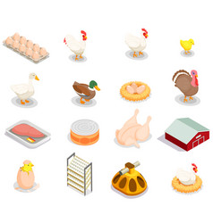 Poultry production isometric set vector