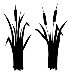 reed vector image