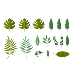 tropical plant and palm leaves set vector image