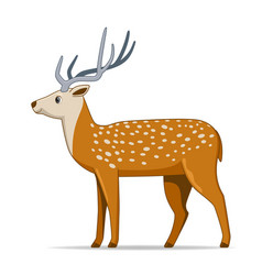 Axis deer animal standing on a white background vector