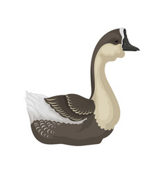 Goose with beige chest gray head wings and beak vector