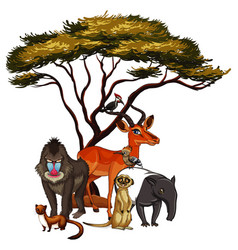 Isolated picture many animals vector