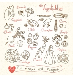 Set drawings of vegetables for design menus vector
