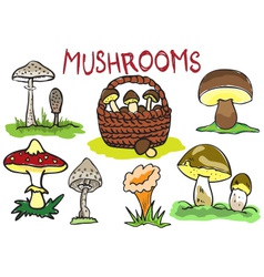 Several kinds of mushrooms vector