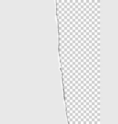 teared from top to bottom vertical sheet white vector image