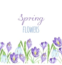 Early spring purple crocus and snowdrops nature vector image vector image
