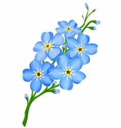 forget me not flowers vector image vector image