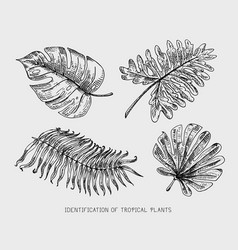 engraved hand drawn tropical or exotic leaves vector image