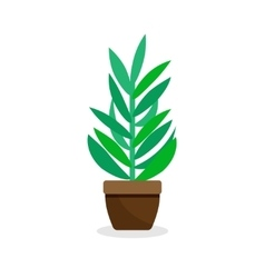 Green indoor plant in pot - flat on vector