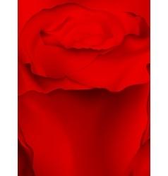 Macro image of dark red rose EPS 10 vector